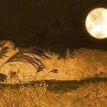 秋の夜長イメージ画像