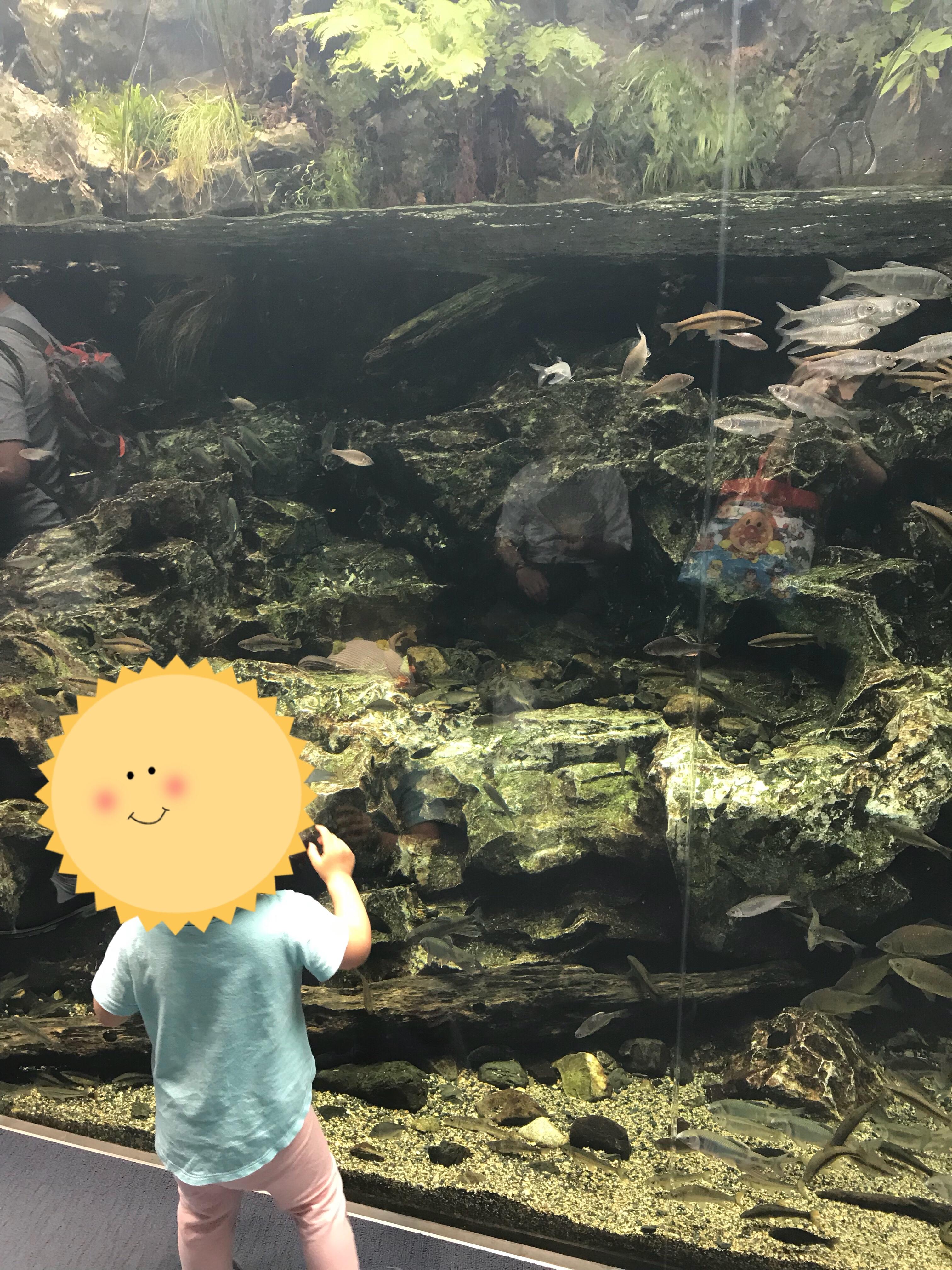 京都の川魚たちが泳ぐ水槽。水槽自体がとてもクリアで、まるで川の中を一緒に泳いでいるような気分に。