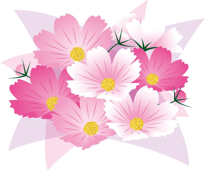 赤ピンク白のコスモス花束