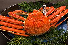 浜坂漁港水揚げの蟹の写真